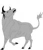 Bull_3