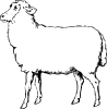 sheep_BW