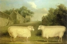 Boerderijdier foto