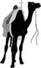 Camel_02