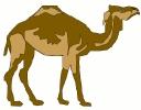 camel_6