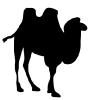 camel_contour