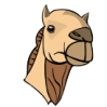 camel_head