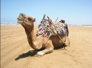 camel_picture