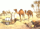 camel_travel
