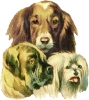 3_dogs