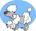 aging_poodle_toon