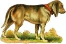 bloodhound_1