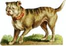 bulldog_3