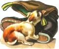 dog_boot