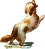 jumping_dog