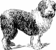 sheepdog_BW_sketch