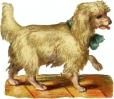 small_white_dog