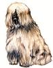 Tibetan_Terrier