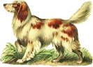 white_brown_dog