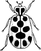 13_spotted_lady_bug