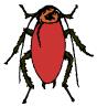 american_cockroach