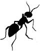 ant_3