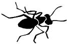 ant_4