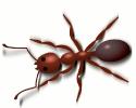 Ant_copper_colored