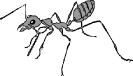 ant_large_BW