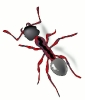ant_red_stylized
