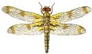 bandoo_dragon_fly