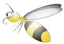 bee_bug-eyed