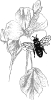 bee_by_flower_BW