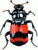 Insecten op naam