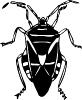 bug_large_black