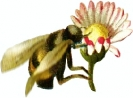 bumblebee_flower