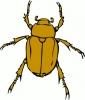 chafer_bug