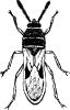chinch_bug