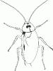 cockroach_BW