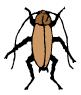 german_cockroach