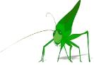 grasshopper_green_cool_w_shadow