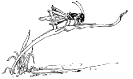grasshopper_on_blade_of_grass