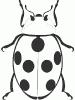 ladybug_BW