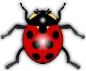 Ladybug_glossy