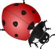 ladybug_large