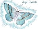 Light_Emerald_Moth