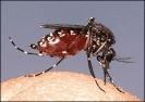 mosquito_biting