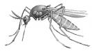 mosquito_BW
