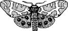 moth_wings_open