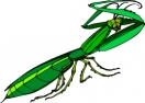preying_mantis