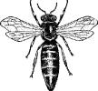 queen_bee