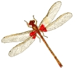 red_spottd_damsel_fly