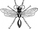sand_wasp