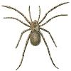 slightly_hairy_spider